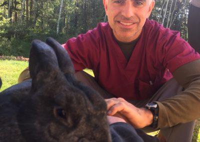 acupuncture-rabbit2